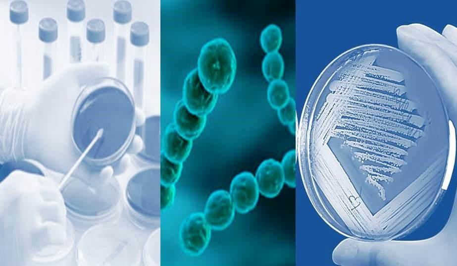 laboratório de microbiologia