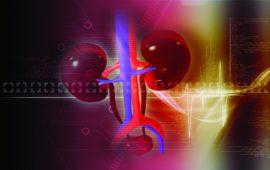 Biomarcadores das Funções Renais