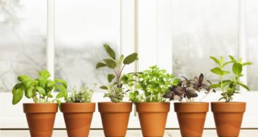 O horticultor Alys Fowler, ex-apresentador da BBC, afirma que podemos tratar problemas simples com ervas plantadas em casa | Foto: Getty Images.
