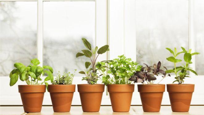 O horticultor Alys Fowler, ex-apresentador da BBC, afirma que podemos tratar problemas simples com ervas plantadas em casa   Foto: Getty Images.
