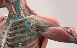 anatomia-topografica-humana